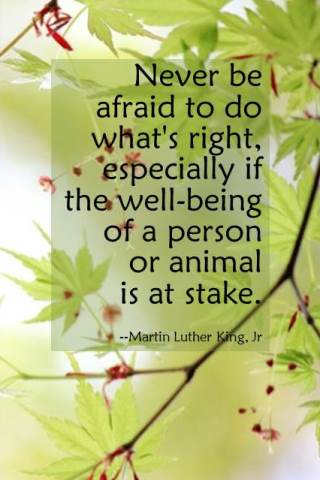 Quote by Martin Luther King, Jr